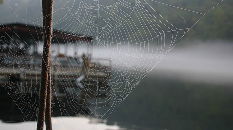 A spider builds a web on a dock